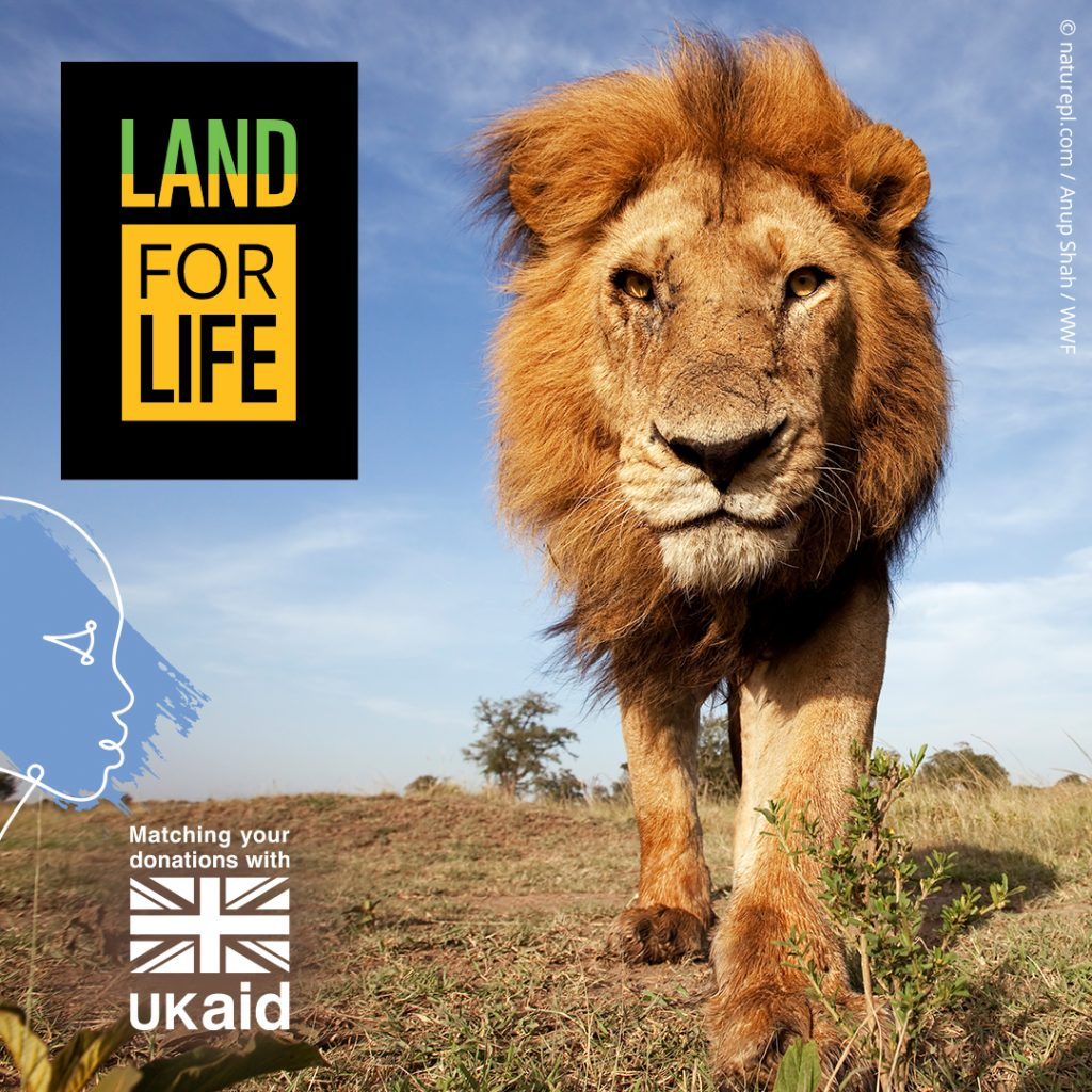 Land For Life appeal image of Lion
